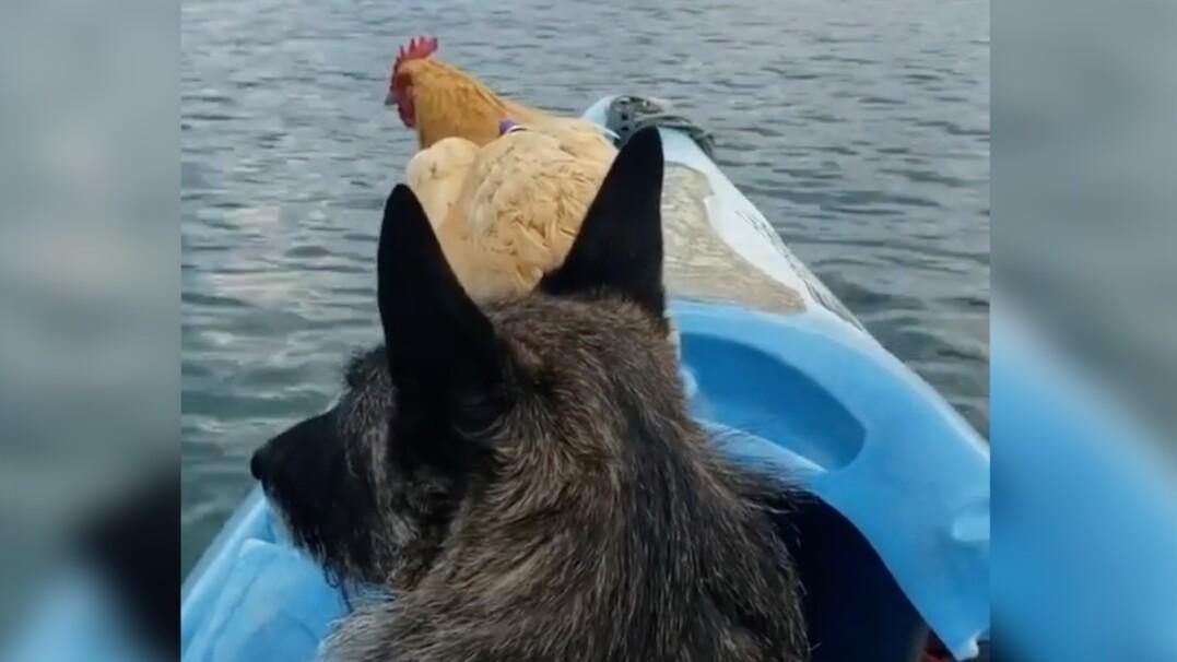 Kura i pies na urlopie
