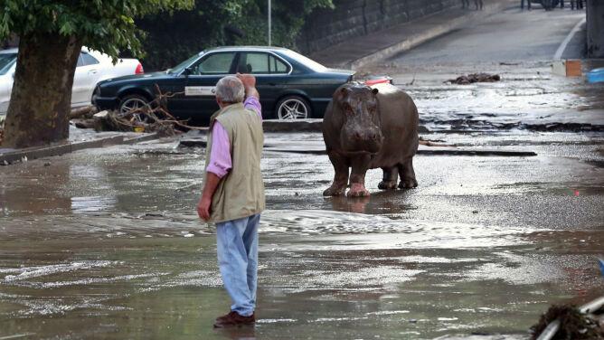 Tbilisi: najgorsze ulewy od półwiecza. <br />Wielka ucieczka z zoo