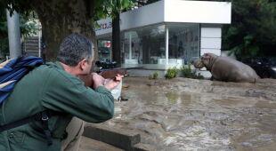 Dzikie zwierzęta na ulicach Tbilisi (PAP/EPA)