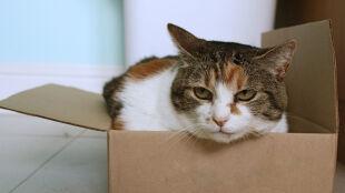 Sprawdź, dlaczego koty kochają pudełka